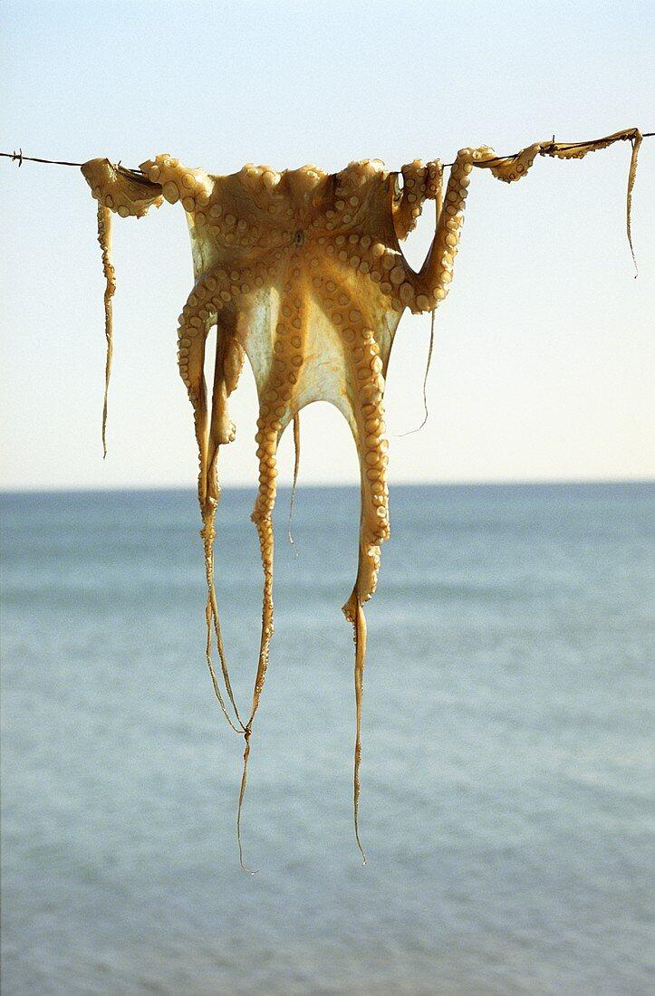 Drying octopus
