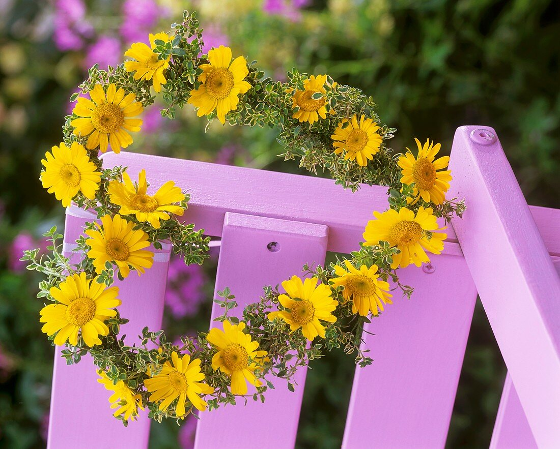 Wreath of golden marguerite & lemon thyme on pink chair back