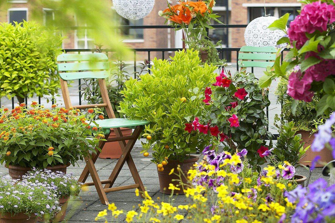 Summer flowers in pots on terrace