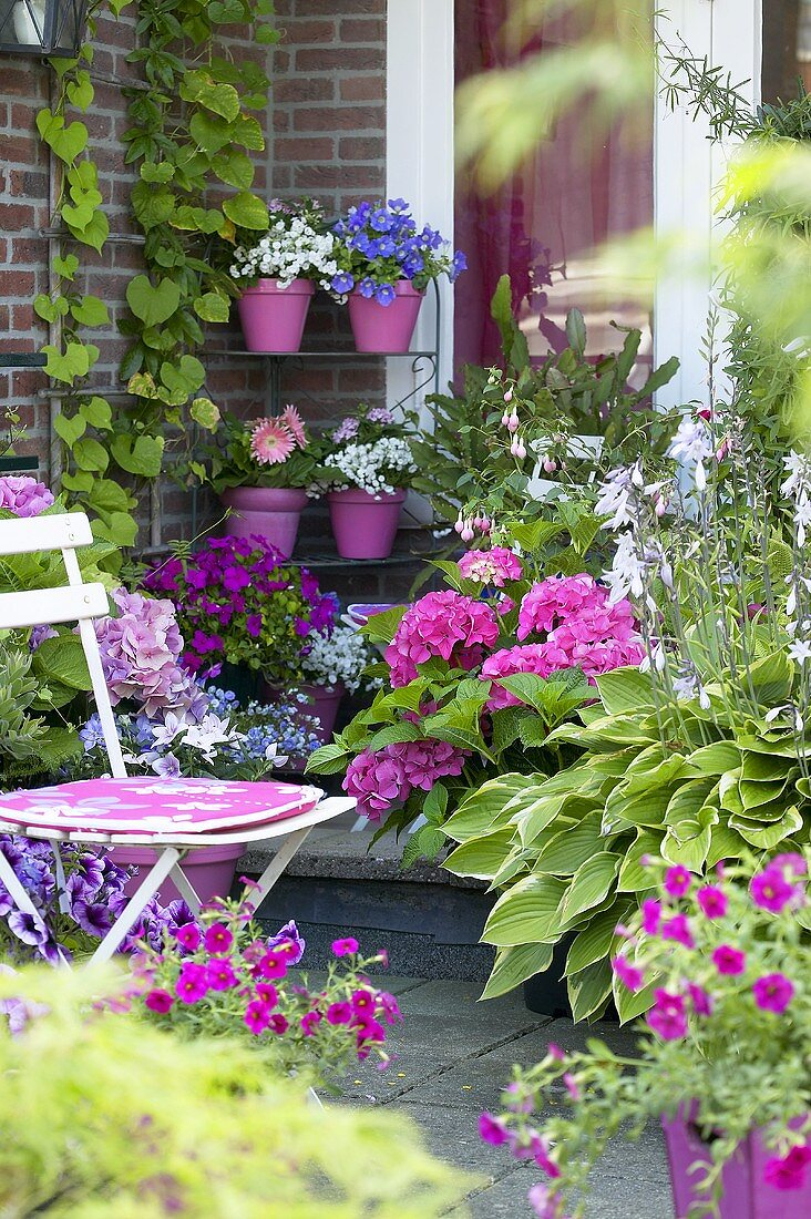 Summer flowers on terrace in front of house