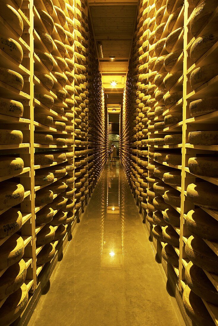 Comté cheeses in Fort de Rousse cheese cellar