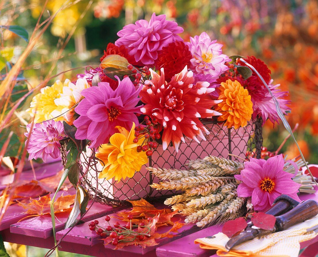 Arrangement of dahlias, cereal ears and secateurs in front