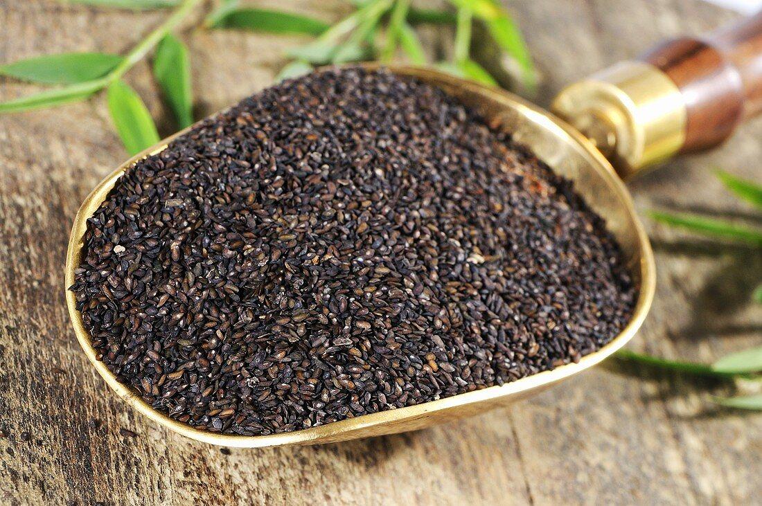 Plantago asiatica seeds (Che Qian Zi, China) in scoop