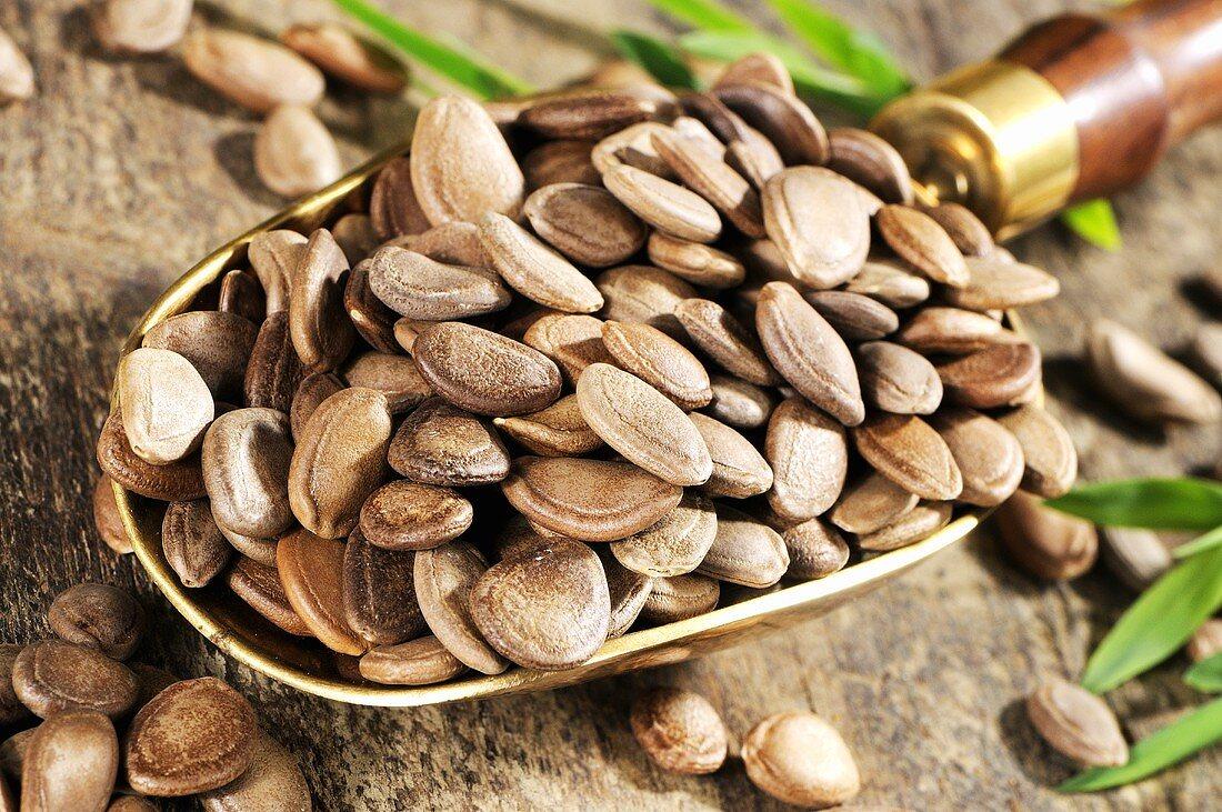 Snake gourd seeds in scoop