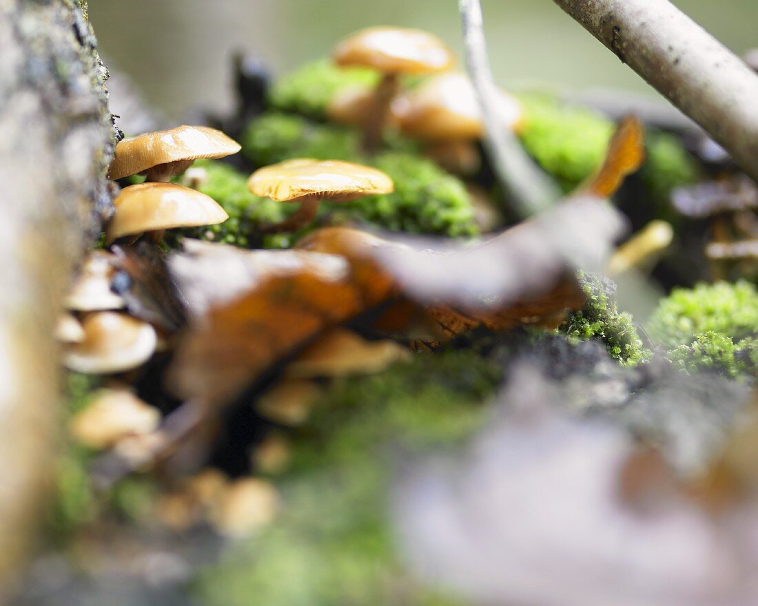 Fungus in moss