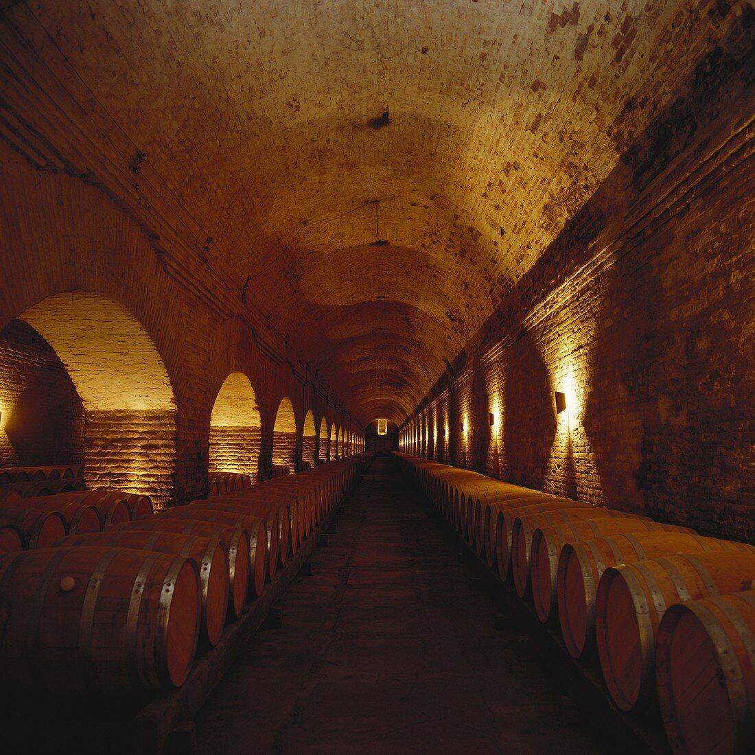 Wine cellar of family-run Viña Cousiño Macul, Chile