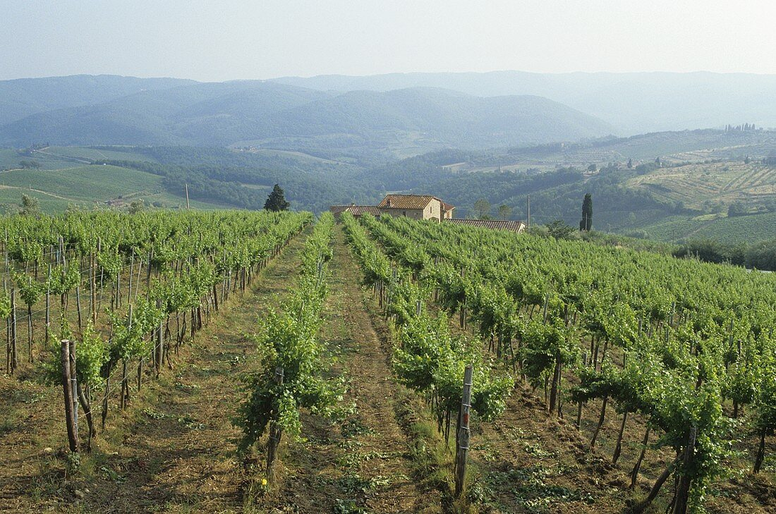 Al Tondo estate, Ruffino, Tuscany, Italy