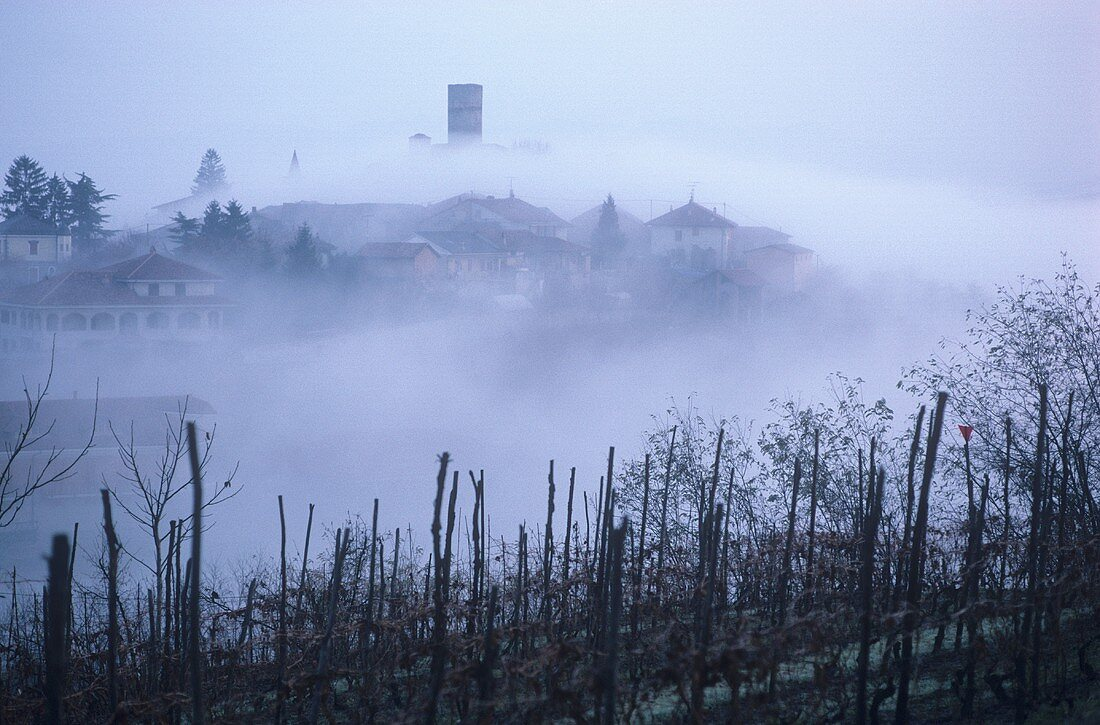 Barolo village of Castiglione Falletto, veiled by cloud, Piedmont