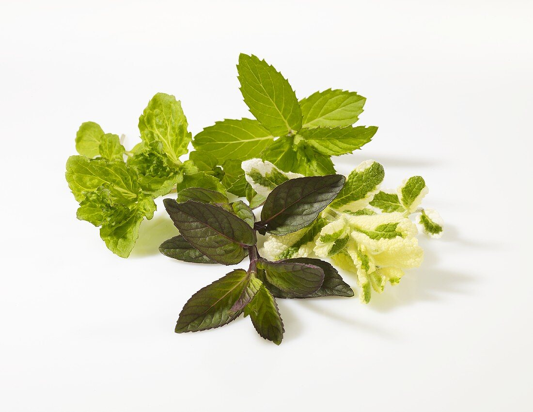 Various types of mint