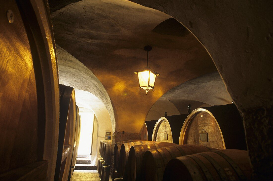 Old barrel cellar, Tenuta San Leonardo, Borghetto, Trentino, Italy
