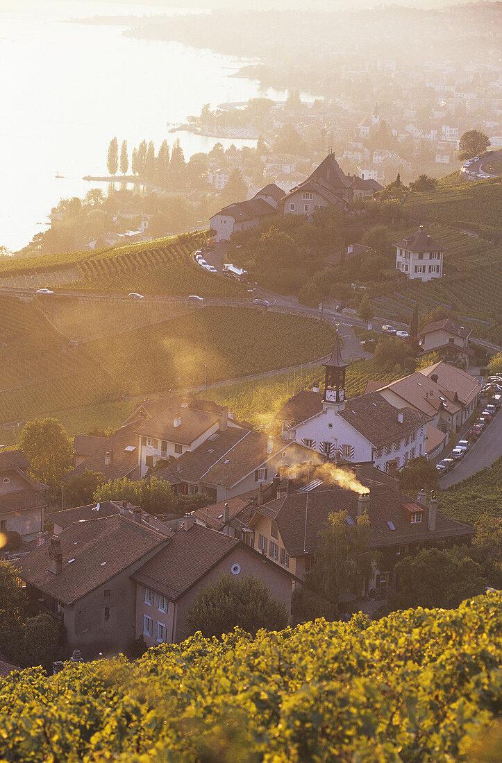 Weiler Aran in der Appelation Villette, Lavaux, Waadt, Schweiz