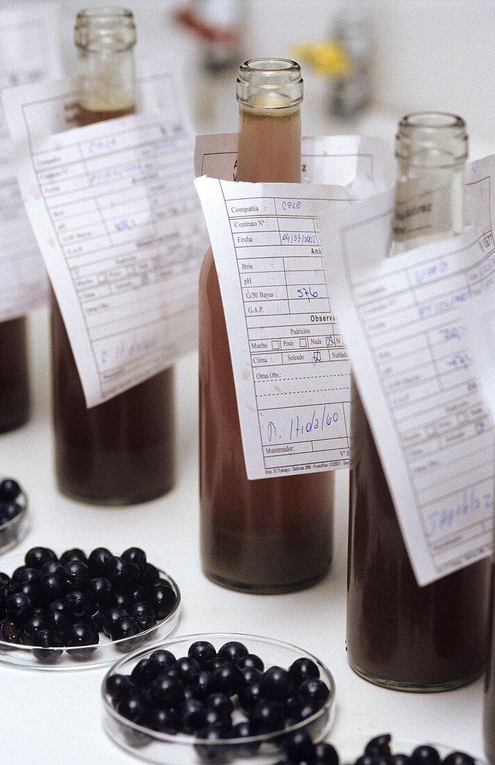 Must samples & grapes, Don Maximiano, Viña Errazuriz, Chile