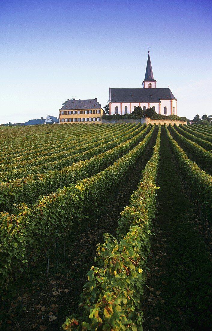 'Hochheimer Domdechaney' Einzellage (single vineyard), Rheingau, DE
