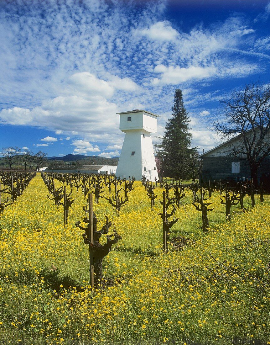 Whitehall Lane Winery, Napa Valley, California, USA