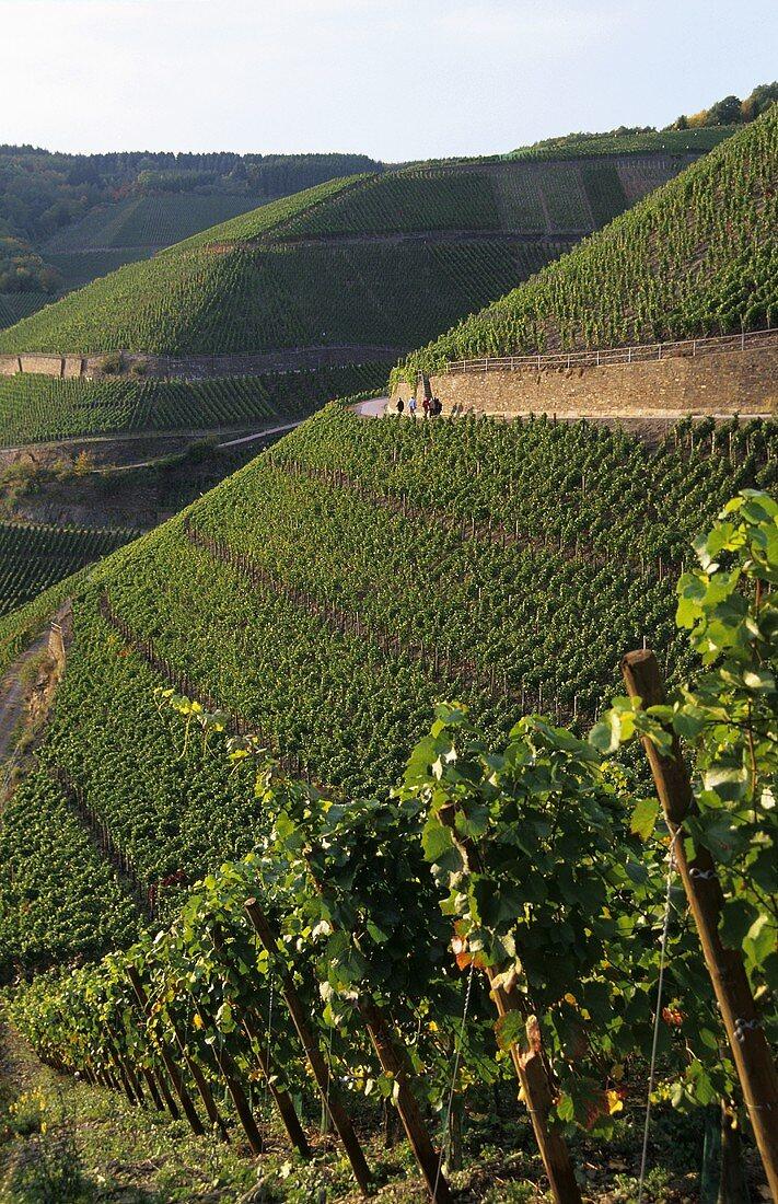 'Dernauer Pfarrwingert' Einzellage (single vineyard), Ahr