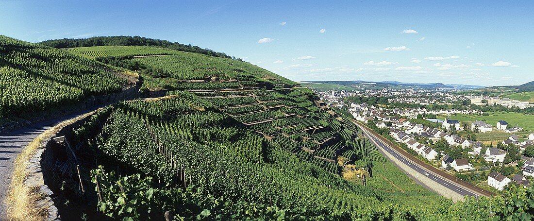 'Walporzheimer Alte Lay' with view over Walporzheim, Ahr