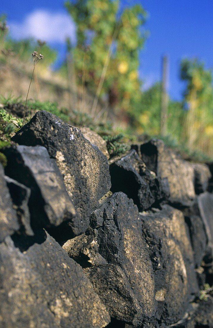 Typical syenite vineyard wall, Diesbar-Seusslitz, Saxony, Germany