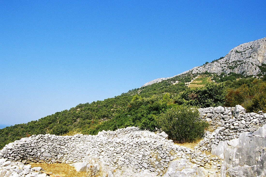 Old vineyards among rocks near Sveta Nedelja, island of Hvar, Croatia