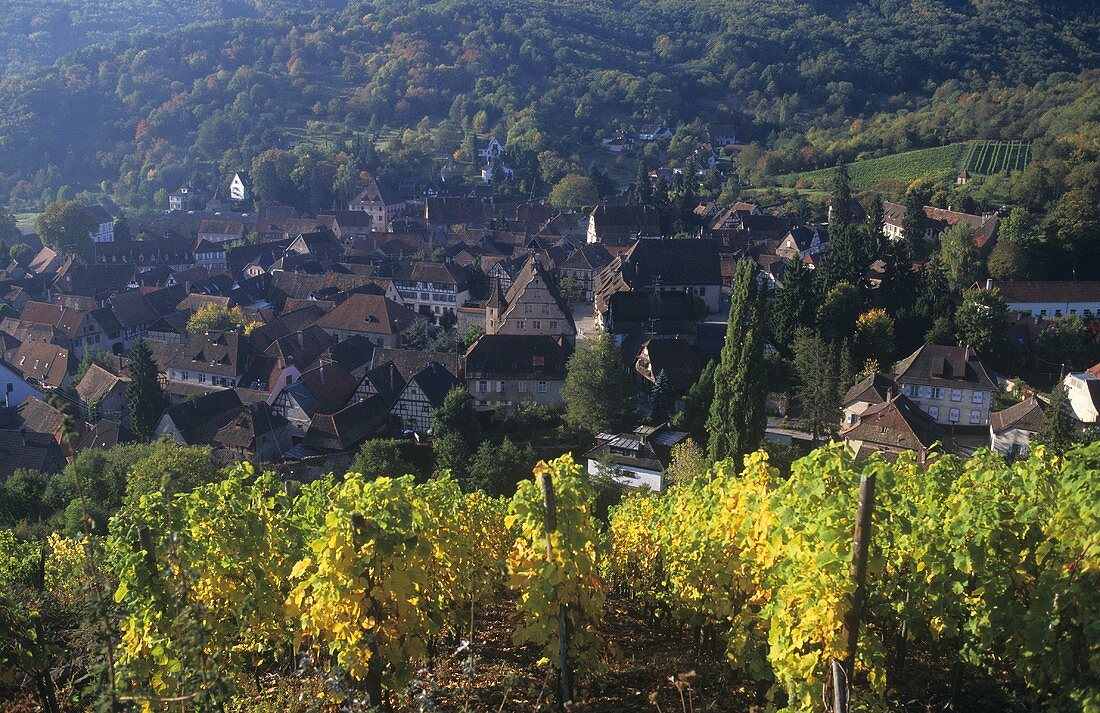 View of Andlau, noted wine village in Alsace, France