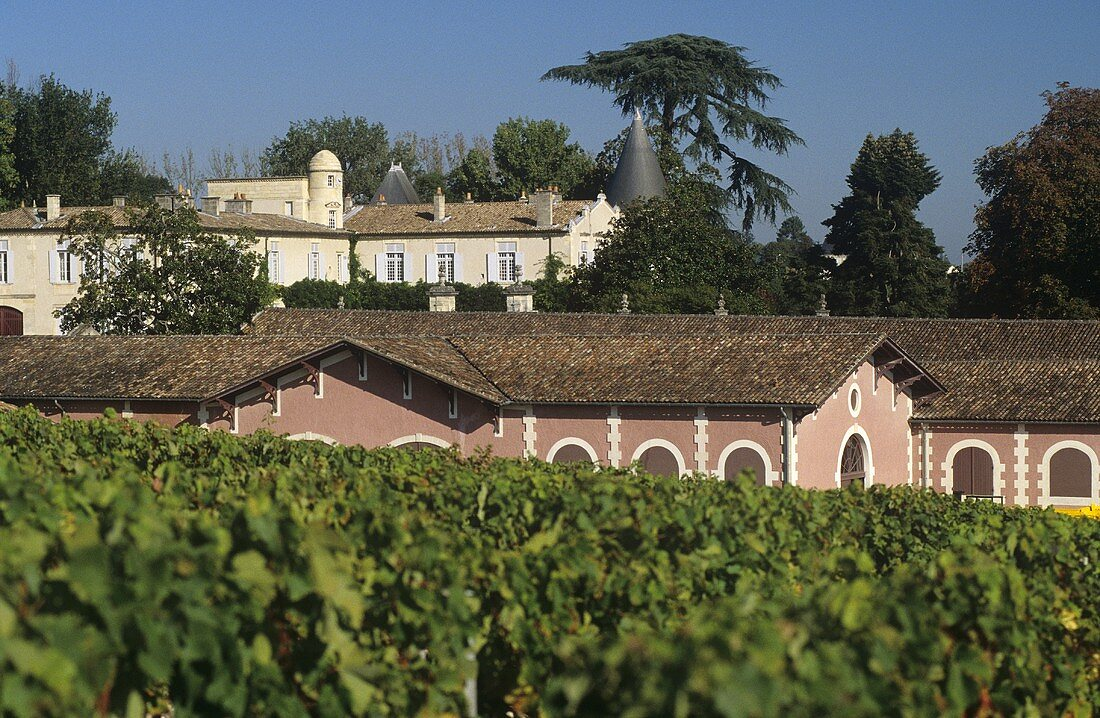 Vineyard in front of Chateau Lafite-Rothschild, Pauillac, Medoc