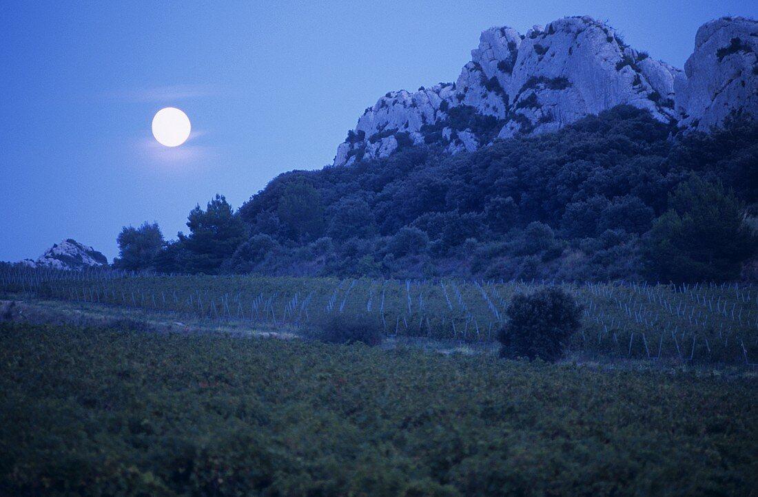 Wine-growing near Les Baux, Provence, France