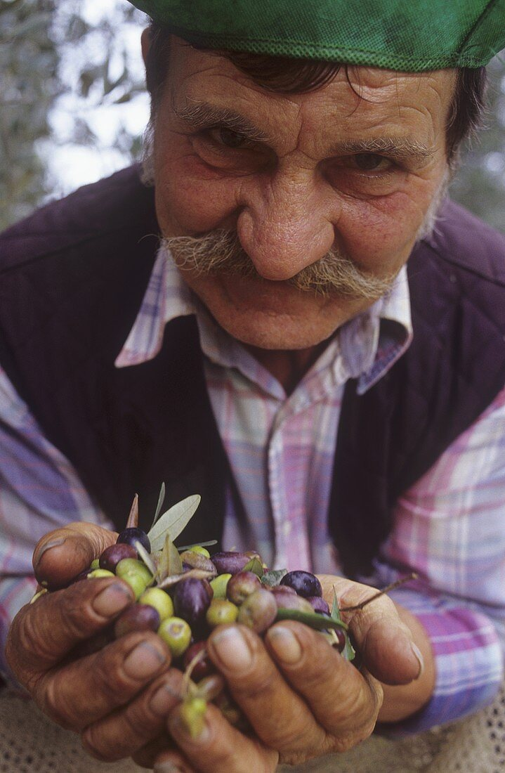Farm worker with fresh olives