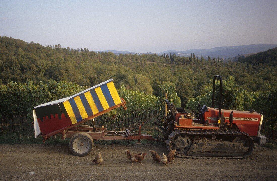 Vineyard of Poggio al Sole Estate, Chianti Classico, Italy