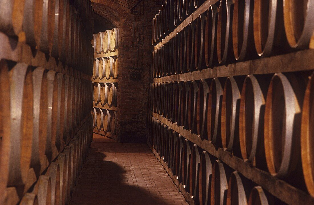 Barrique cellar, Avignonesi Estate, Montepulciano, Tuscany