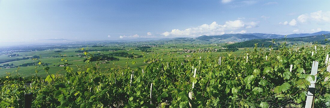 View over landscape near Brouilly, Beaujolais, France