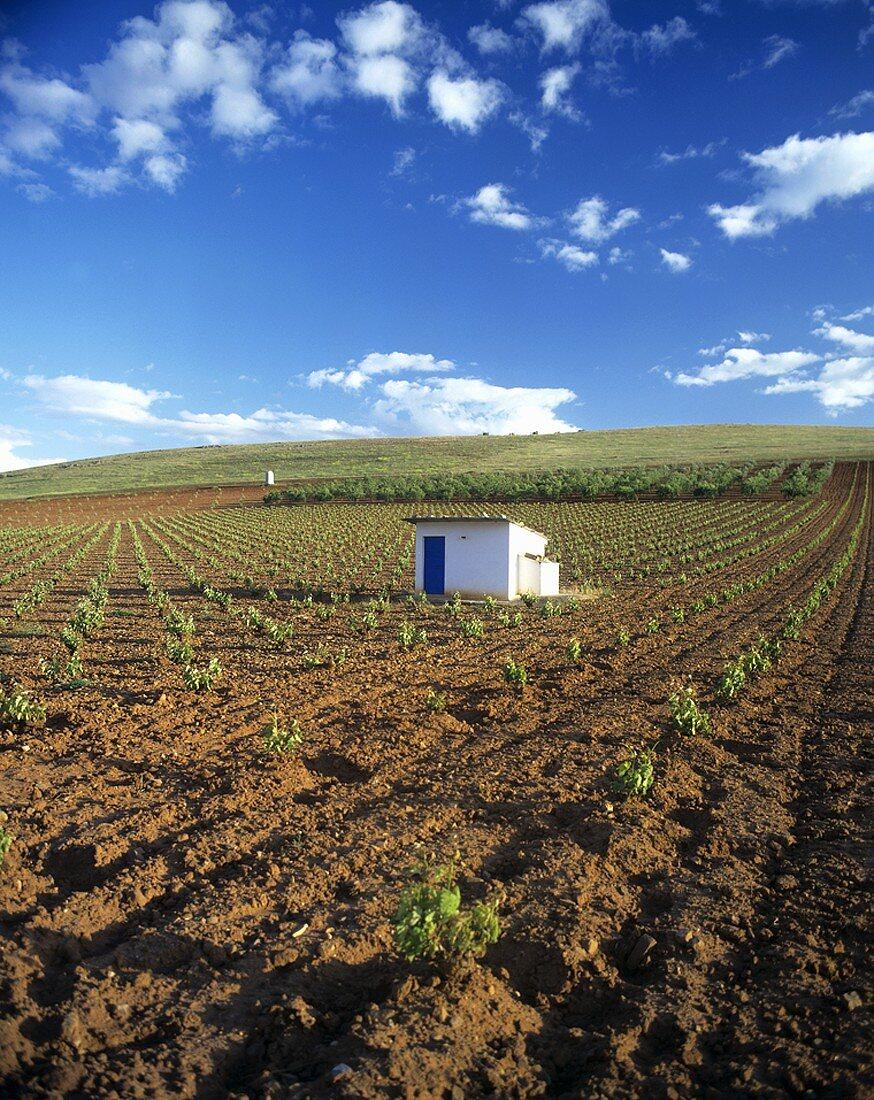 Wine landscape, Valdepeñas, Spain