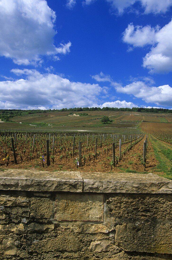 Romanée-Conti vineyards, Vosne-Romanée, Burgundy, France