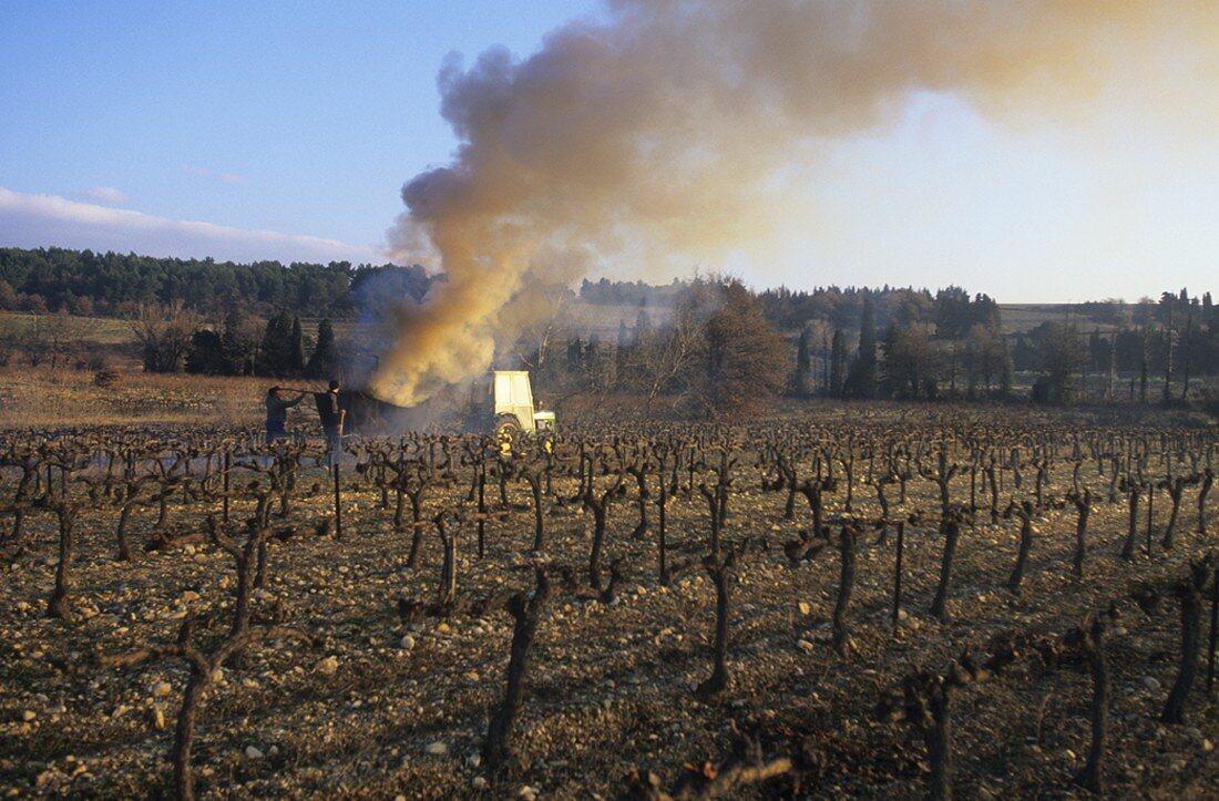 Vineyard of Cave de Rasteau estate, Vaucluse, France