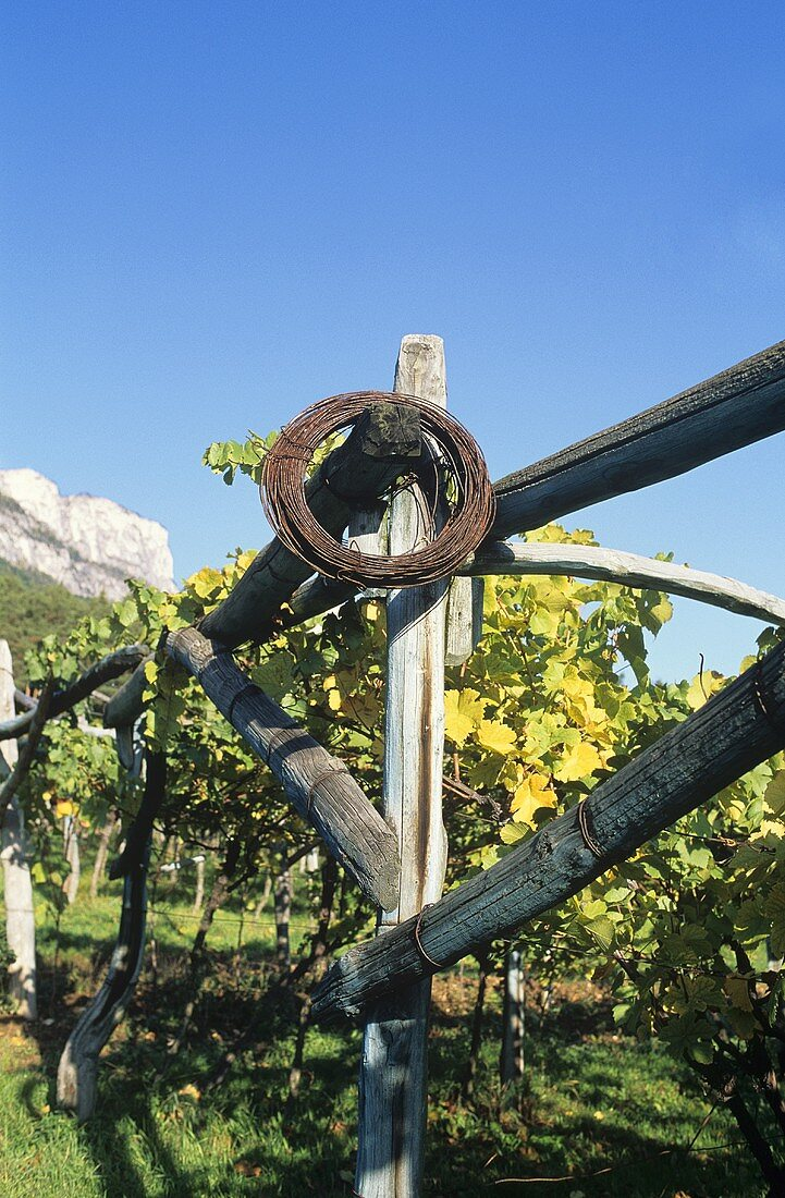 Frame for vines, S. Tyrol, Italy