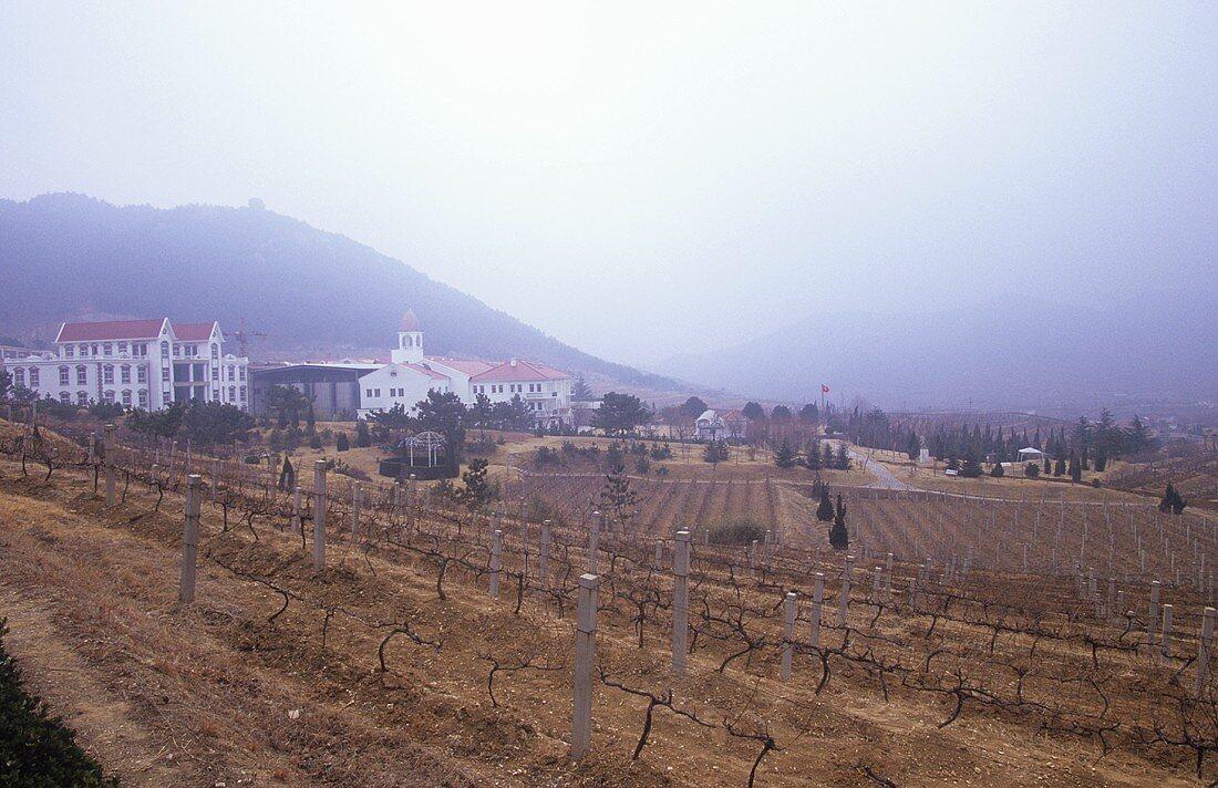 Huadong Winery, Qingdao (Tsingtao), China
