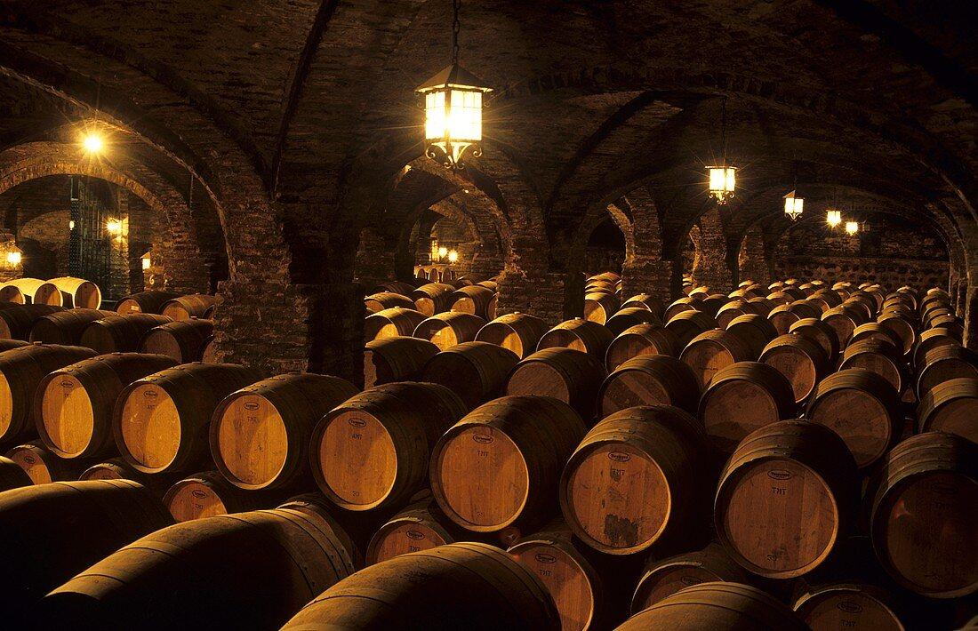 Santa Rita Winery,  Buin,  Maipo Valley,  Chile