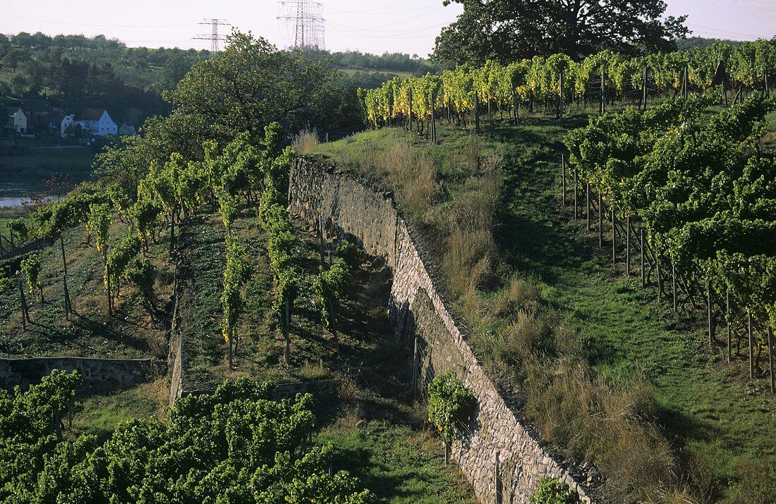 Typical syenite vineyard wall, Diesbar-Seusslitz, Saxony, Germany