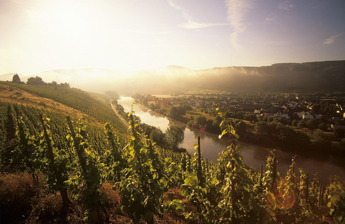 Morning over the Saar near Schodern, Mosel-Saar-Ruwer, Germany