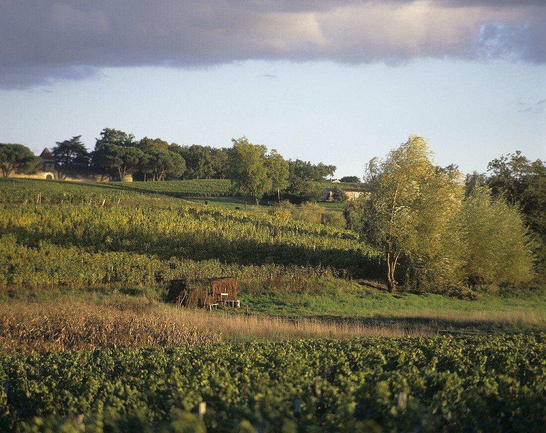 Wine-growing around Sauternes, Bordeaux, France