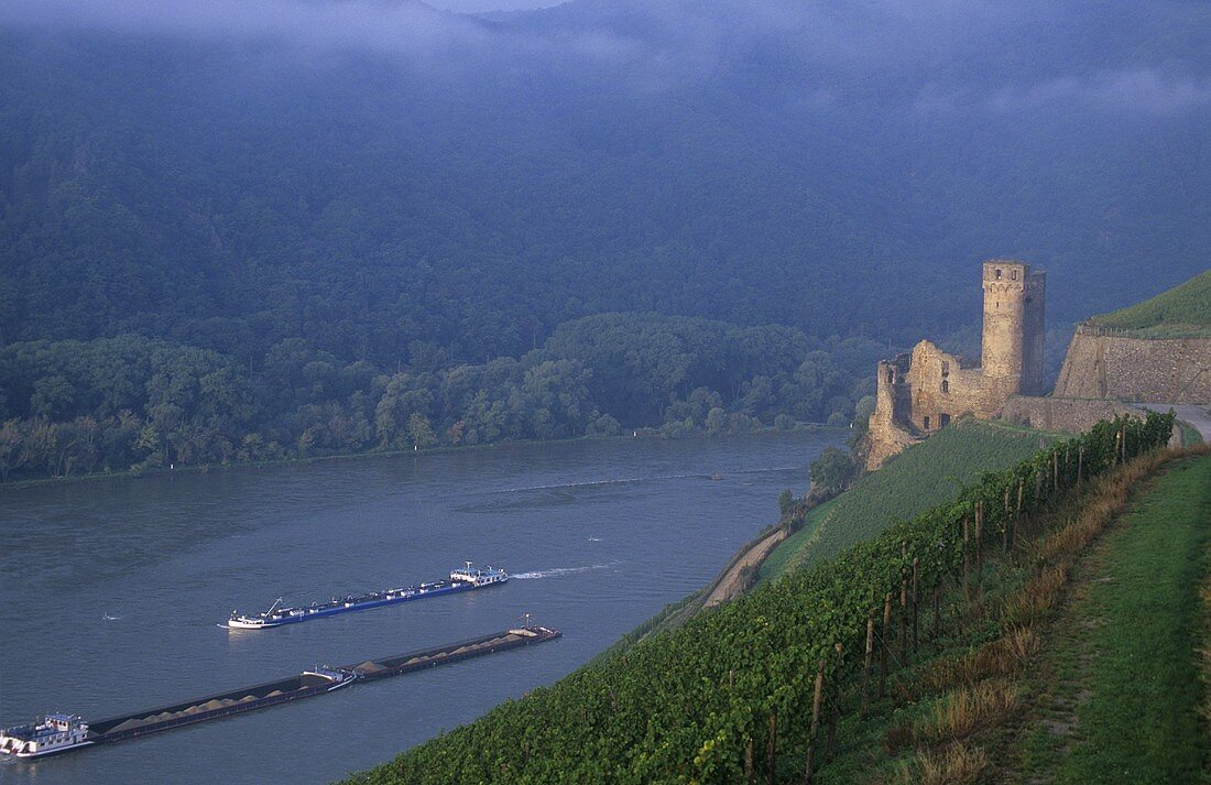 'Rüdesheimer Berg Schlossberg' single vineyard site, Rüdesheim, Rheingau