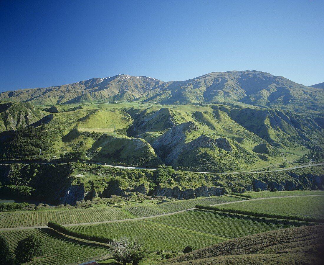 Chard Farm, Central Otago, New Zealand