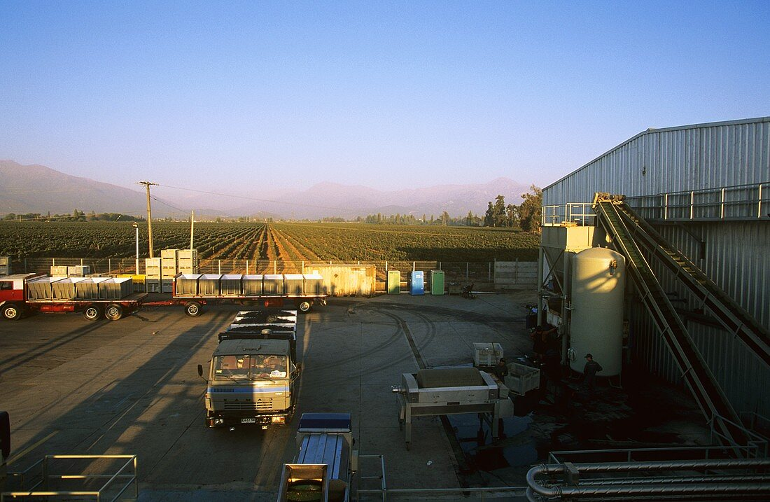 View of winery, 'Puente Alto', Chile