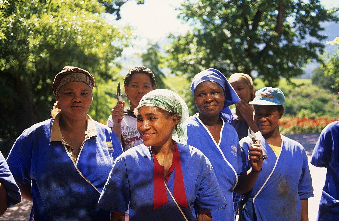 Female grape pickers, Rust & Vrede, Stellenbosch, South Africa