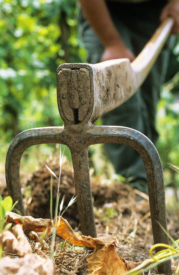 Man working soil with mattock fork, Schoden, Mosel-Saar-Ruwer, DE
