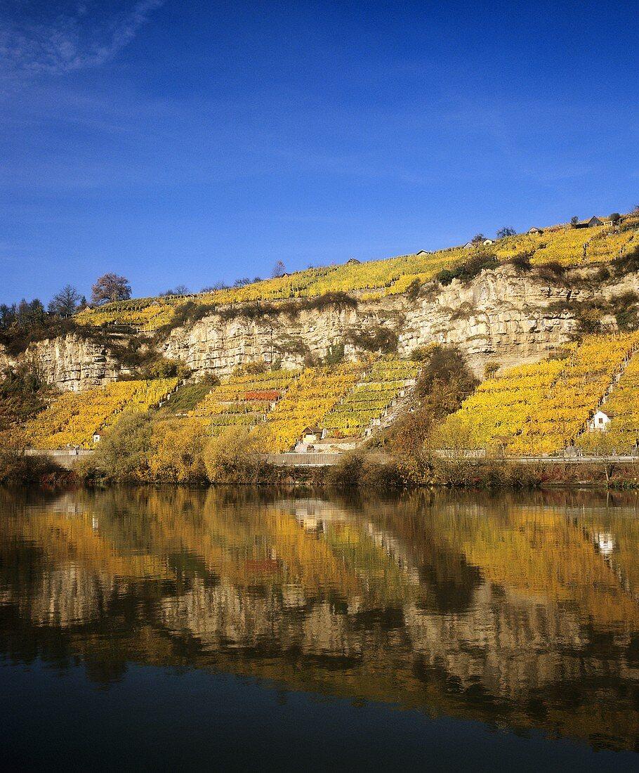 'Hohenecker Neckarhälde' Vineyard, Württemberg, Germany