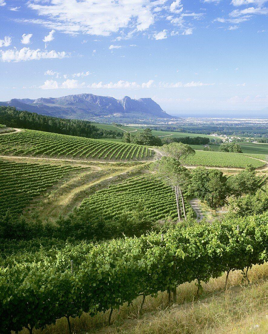 View over the Klein Constantia Estate, Constantia, S. Africa