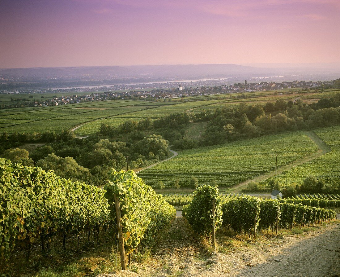 View of Hallgarten over vineyards, Germany