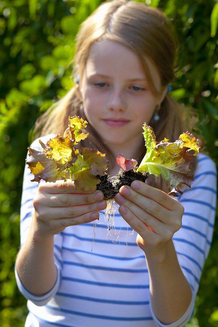 A girl holding lettuce seedlings