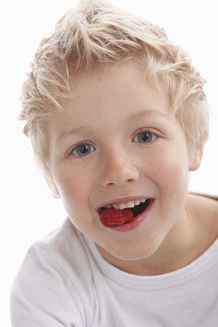 A little boy eating raspberries