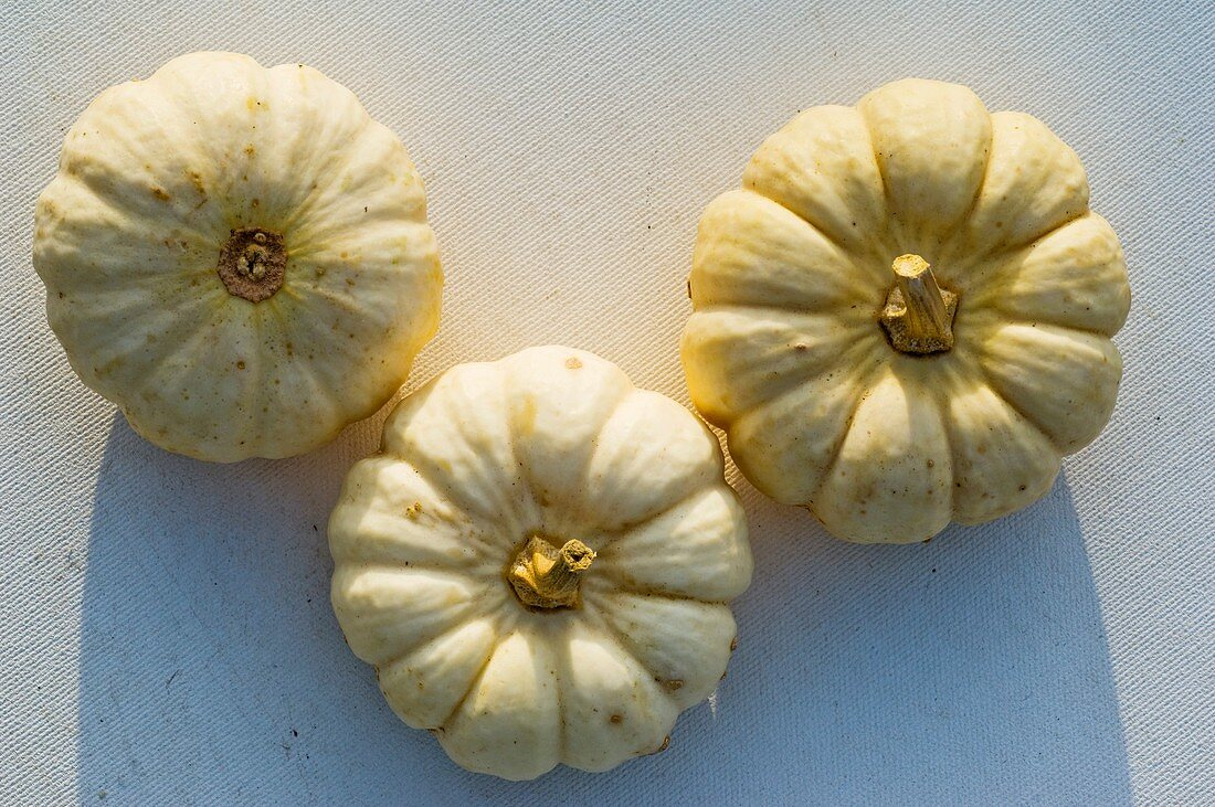 Three small white pumpkins (variety 'Baby Boo') from above