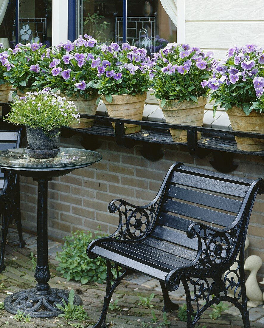 Terrace with pansies in pots